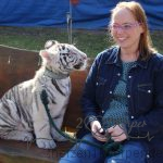 der kleine Tiger Adonis