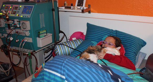 Heimdialyse mit meiner Katze