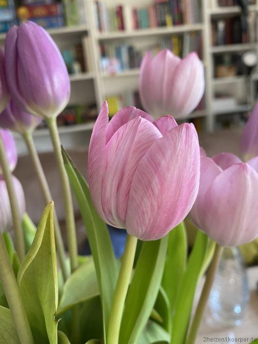Ein Blumenstrauß mit rosa Tulpen nach Transplantation mit Abstand zu genießen
